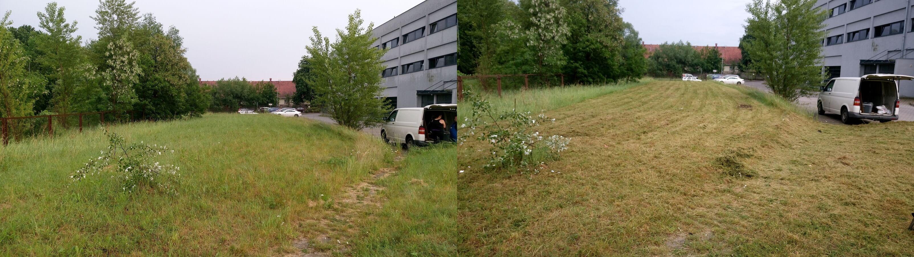 Koszenie trawników - Lewkorp Legnica