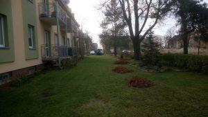 Sprzątanie ogrodu - Lewkorp Legnica