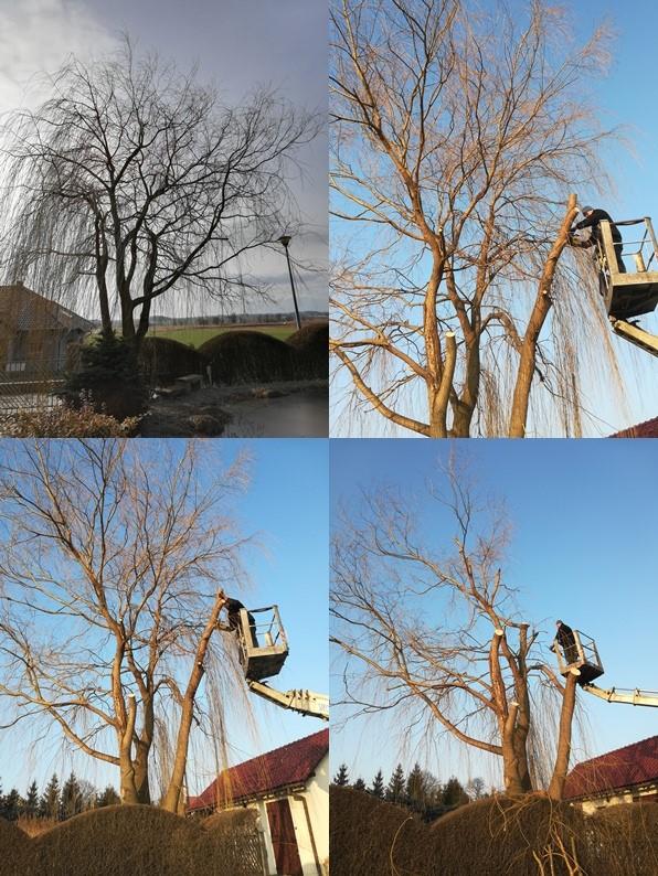 Wycinka drzew - Lewkorp Legnica